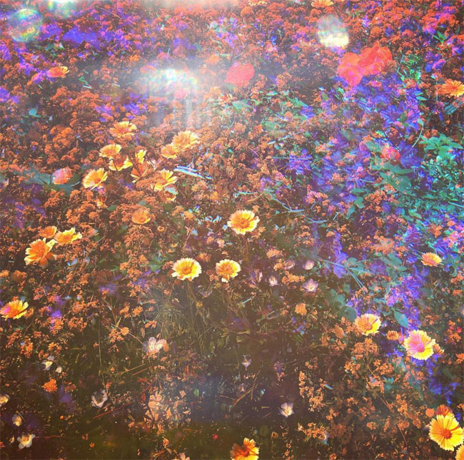 Psychedelic flower garden by artist Olivia D'Orazi. Read the interview with the psychedelic artist at Different Drum. differentdrumblog.com