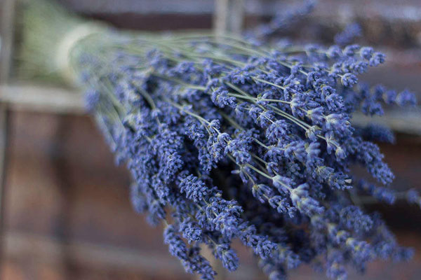 Dried Lavender Flowers offered by QueenBeeWreath on Etsy