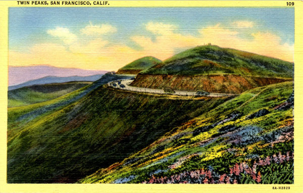 Vintage Postcard of Wildflowers at Twin Peaks in San Francisco