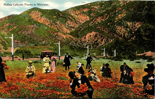 A Vintage Postcard of Men and Women Picking Poppies