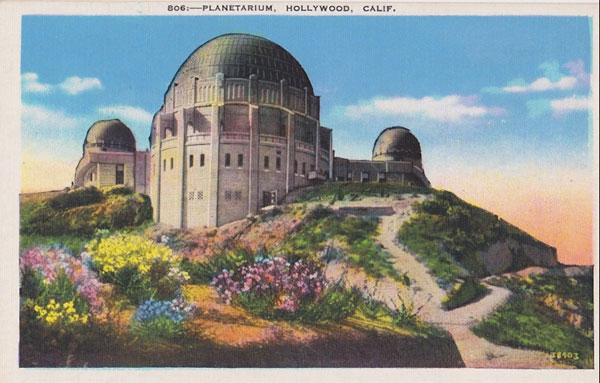 Vintage Postcard of Wildflowers at Griffith Park